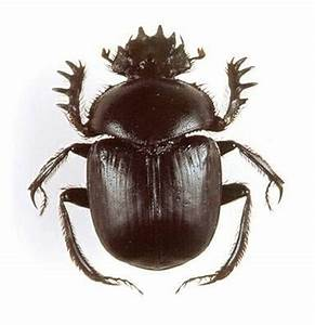 1000+ images about Scarabs on Pinterest | Brooches, Museum ...