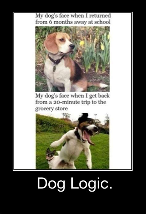 Dog Logic Meme - dog logic meme 28 images dog logic meme 28 images dog logic vs cat logic laugh dog logic vs