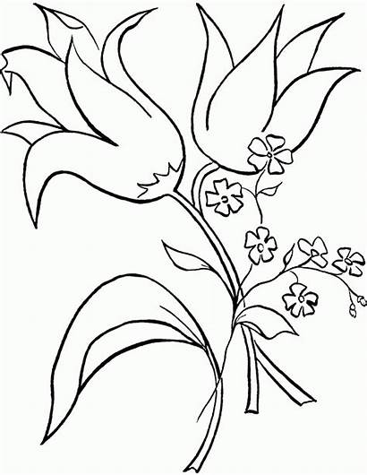 Coloring Flower Tropical Flowers Printable Vase Lily