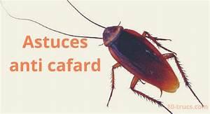 Comment Éliminer Les Cafards : anti cafard 10 trucs pour liminer les cafards truc et astuces ants cleaning et beef ~ Melissatoandfro.com Idées de Décoration