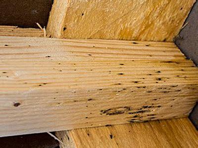 successful bed bug eradication case studies rid