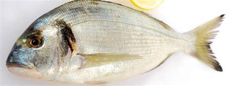 cuisiner dorade découvrez 2 nouvelles recettes de poisson au four