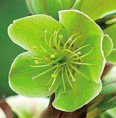 effet contemporain jardin sec fleurs jardins pinterest With attractive jardin en pente que faire 1 construire un muret fleuri