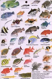 Guide To Reef Fish Of The Indian Ocean  Rod Macpherson  Nhbs