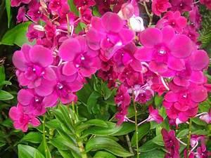 Marlene, Bermejo, Ornamental, Plants