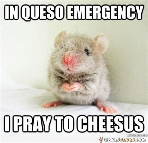 Hamster Memes - 40 very funny hamster meme images and pictures