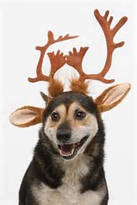 reindeer antlers headband from urban outfitters animals