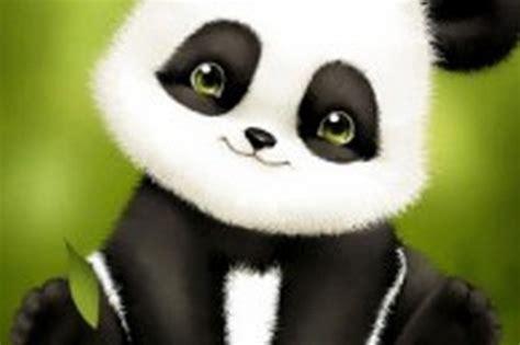 Панда живые обои для андроид