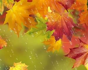 Ahorn Rote Blätter : herbst rote bl tter ahorn wassertropfen regen 1920x1200 hd hintergrundbilder hd bild ~ Eleganceandgraceweddings.com Haus und Dekorationen