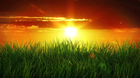 sunrise   green grass stock footage video