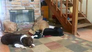 Capybara and a Dogs Forbidden Love - YouTube