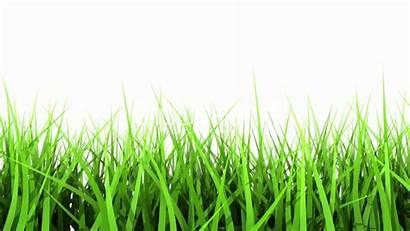 Grass Lawn Care Plano Tx Background Landscape