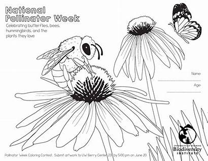 Coloring Pages Pollinator Week National Behance
