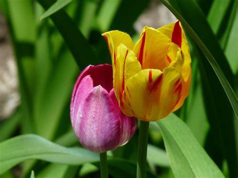 Spring's Wonderful Bounty