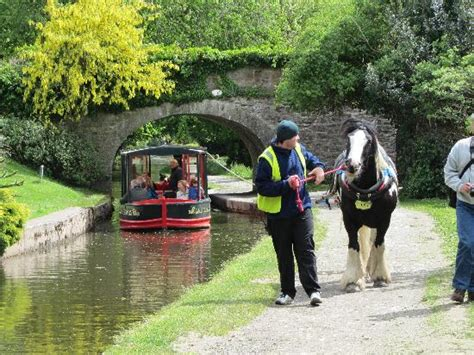 Horses On A Boat by Canal Boat Picture Of Llangollen Wharf Boat