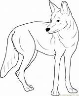 Coyote Coloring Western Pages Coloringpages101 sketch template