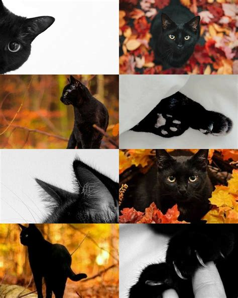 aesthetic black cat wallpapers
