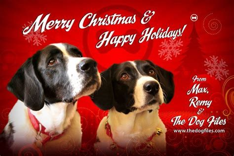 merry christmas happy holidays dog files