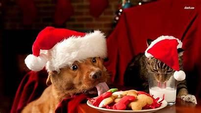 Christmas Dog Animal Animals Pets Pet Wallpapers