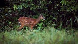 Congo Wildlife Safari