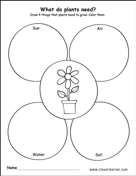 what do plants need to grow worksheet worksheets for all