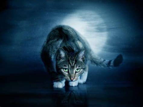weshalb koennen katzen im dunkeln sehen
