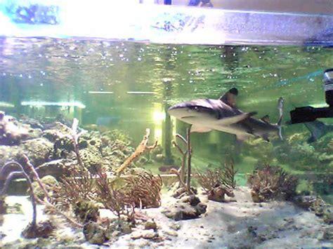 un requin au monde de la mer tech r 233 cif
