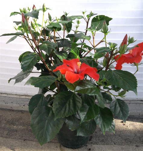 plante d interieur fleurie swyze