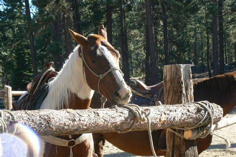tahoe riding lake horseback overlooking haerr trippin
