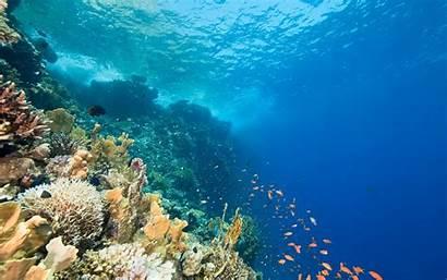 Underwater Ocean Sea Coral Fish Reef Animals