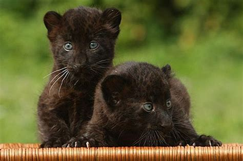 World Images Gallery Black Panther