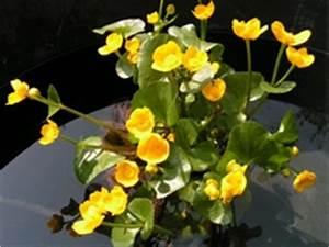 Wasserpflanzen Teich Kaufen : gartenpflanzen pflanzenpflege pflanztipps und pflanzen ~ Michelbontemps.com Haus und Dekorationen
