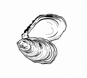 Graphic Design - Danny J Shaw | Shell drawing, Art, Oyster ...