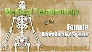 Medical Terminology Of The Female Reproductive System
