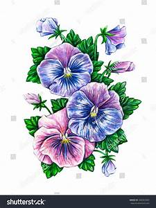 Viola Tricolor Watercolor Colorful Pansies Flowers Stock ...
