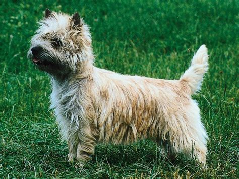 100 dog breeds that live the dog wearing lion