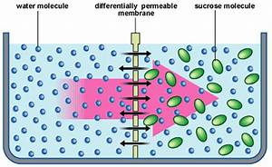 Diffusion  Active Transport And Osmosis  Grade 9