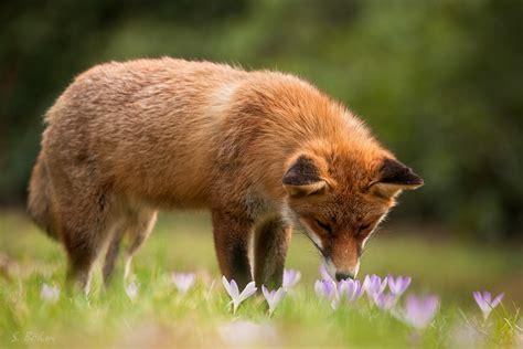 des fruehlings duft forum fuer naturfotografen