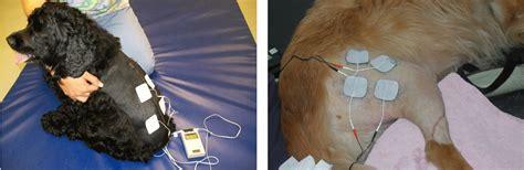 electrical stimulation  dogs toronto dog rehab