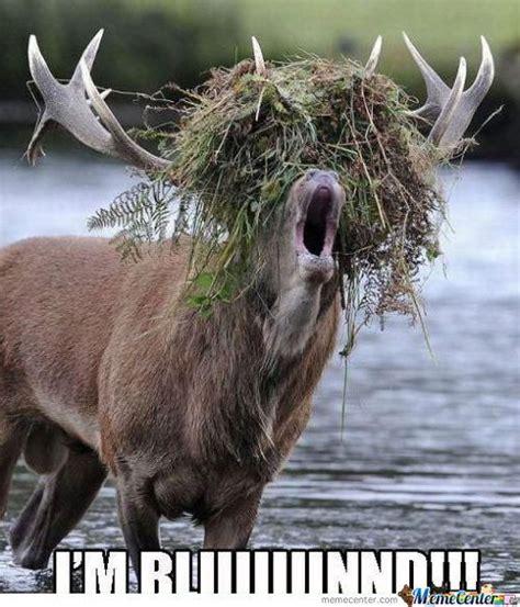 Moose Meme - image gallery moose meme