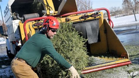 residents encouraged to recycle their natural christmas