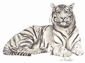 Pencil drawing of a tiger | Drawings | Pinterest
