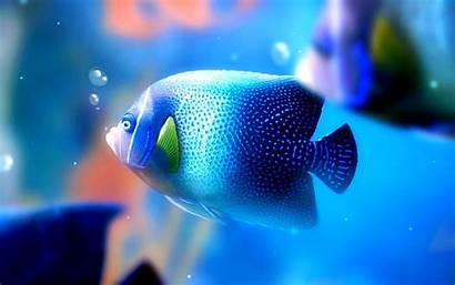 Fish Wallpapers Galaxy Samsung Adorable