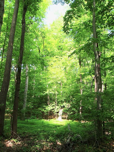 sacred grove clipart   cliparts  images