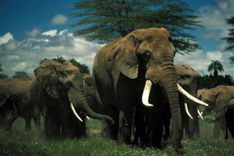 pin  meghan dennehy  elephants  images
