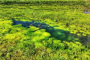 Tundra Ecosystem Free Images Water Nature Marsh Swamp Plant Lawn