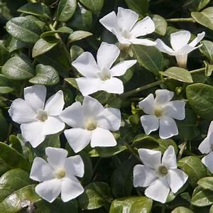 fleurs blanches vivaces couvre sol With tapis champ de fleurs avec canapé gonflable extérieur