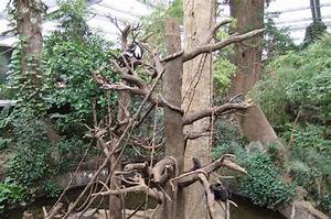 Jungle - Picture of Henry Doorly Zoo, Omaha - TripAdvisor