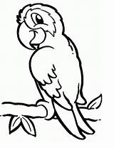 Coloring Parrots Pages Parrot Animal sketch template
