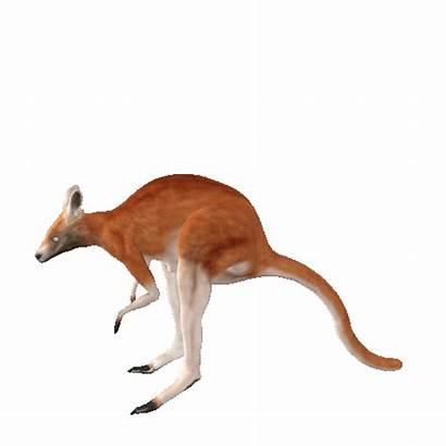 Kangaroo Animated Swf Leaping Gifs Lg Gfycat